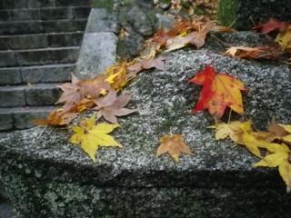 2010.11.23a.JPG